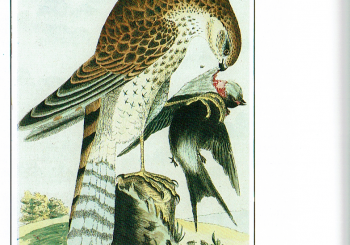 The Illustrated Natural History of Selborne 3 (3/08/2020).
