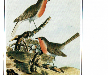 The Illustrated Natural History of Selborne 2 (3/08/2020).